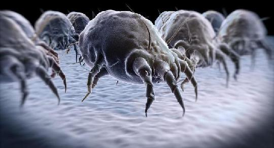 Are dust mites triggering your allergies? It may be time to buy new from the Sealy Mattress Sale in Toronto