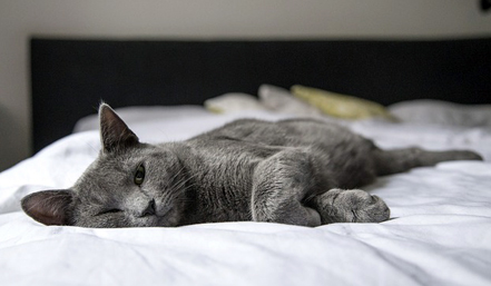 A missing cat was finally found after spending 64 days inside a Stearns and Foster mattress